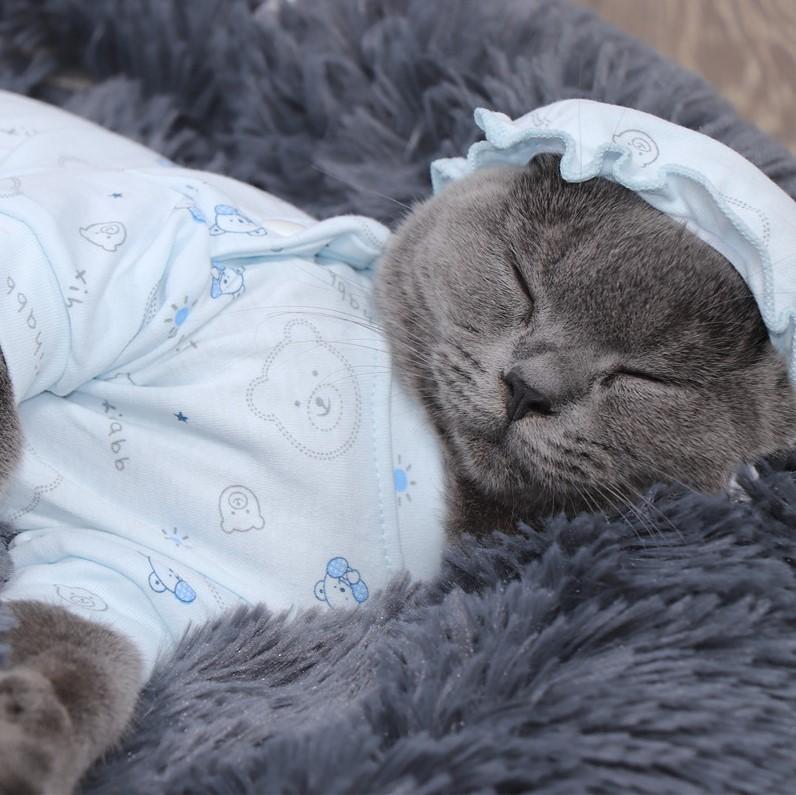 Sắm áo ấm cực xinh cho boss mùa đông không lạnh - Ảnh 7.