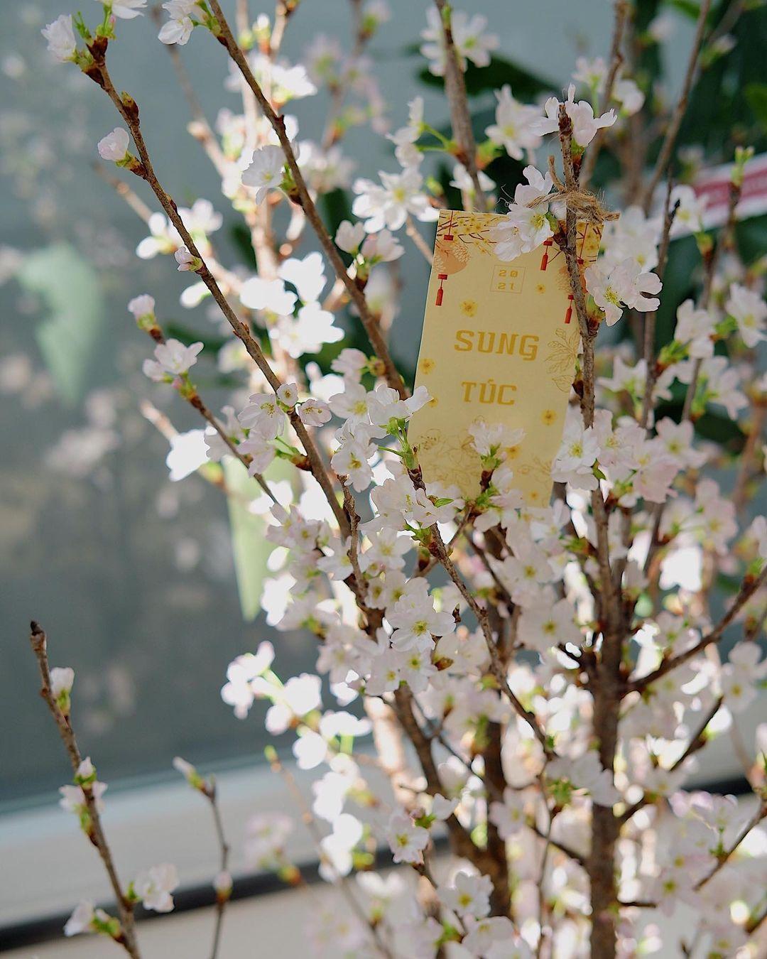 Hoa chơi Tết: Sakura Nhật được hội sành điệu mê tít, giá cao nhưng vẫn lọt top hoa siêu hot - Ảnh 5.