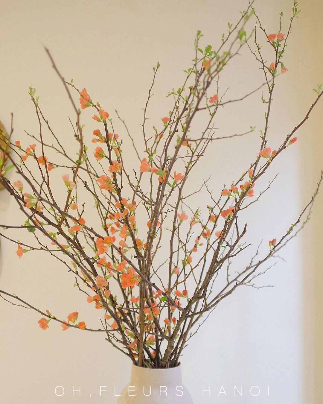 Nàng thơ làng hoa Tết gọi tên đào cam: Đẹp mê ly rụng rời, giá từ 300K - Ảnh 4.