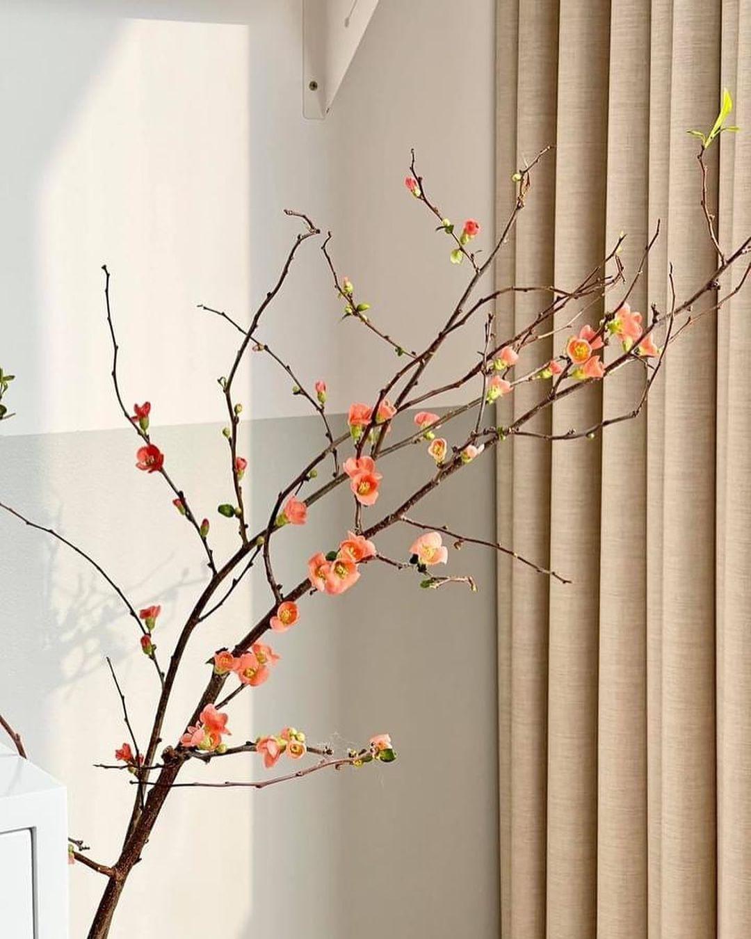 Nàng thơ làng hoa Tết gọi tên đào cam: Đẹp mê ly rụng rời, giá từ 300K - Ảnh 5.