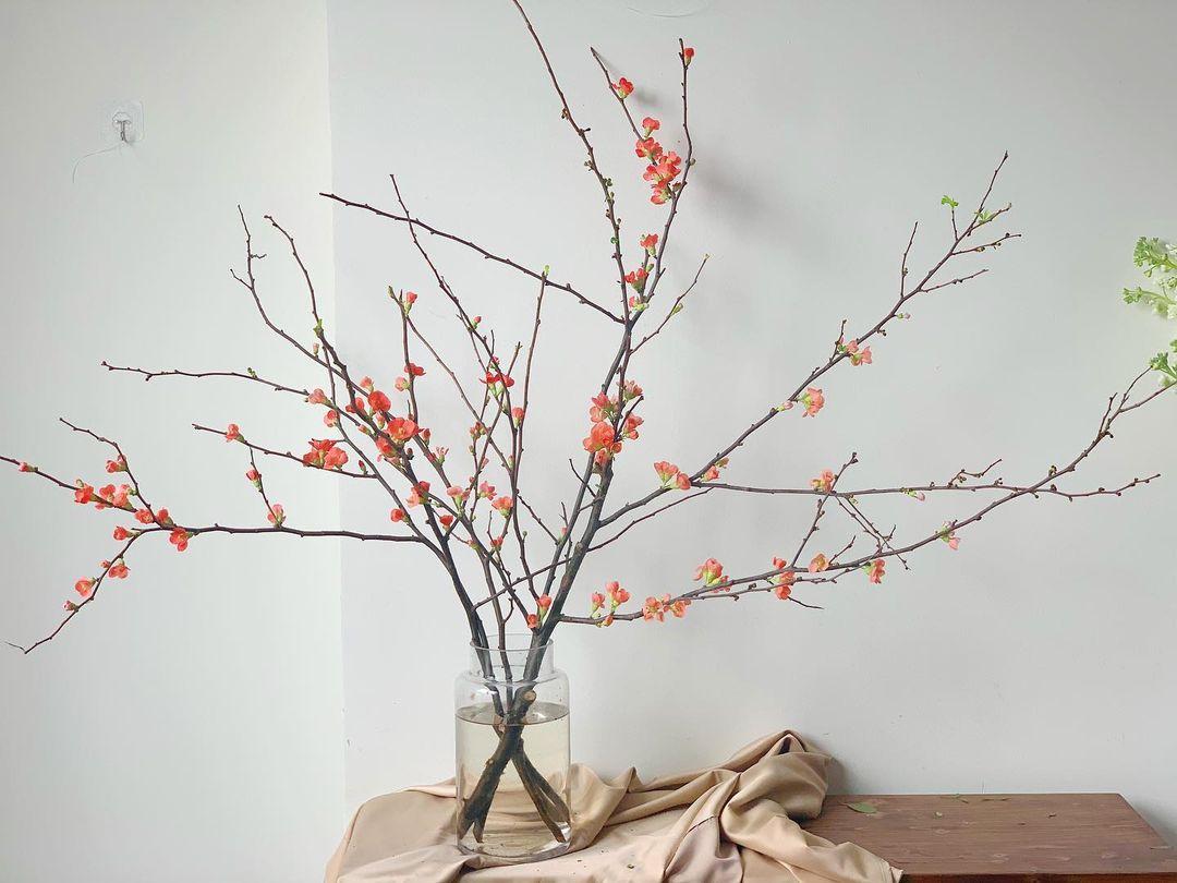 Nàng thơ làng hoa Tết gọi tên đào cam: Đẹp mê ly rụng rời, giá từ 300K - Ảnh 6.