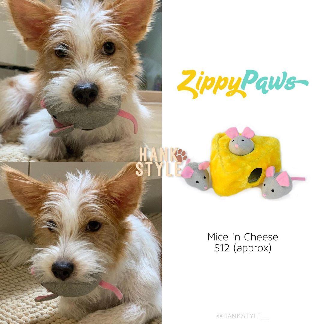 Cún cưng của Rosé lắm đồ xinh ghê: Từ đồ chơi vài trăm nghìn đến áo tiền triệu sành điệu như người - Ảnh 8.