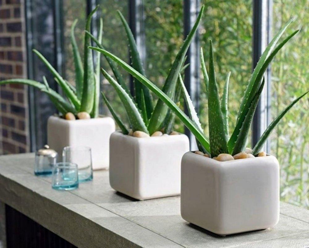 Muốn không gian sống luôn xanh mát, đừng bỏ qua những loài cây trồng này giúp hạ nhiệt cho ngôi nhà trong những ngày hè oi nóng - Ảnh 1.