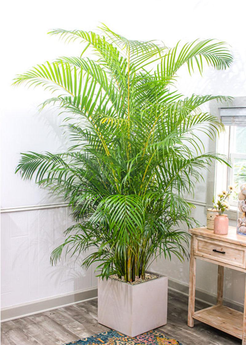 Muốn không gian sống luôn xanh mát, đừng bỏ qua những loài cây trồng này giúp hạ nhiệt cho ngôi nhà trong những ngày hè oi nóng - Ảnh 2.