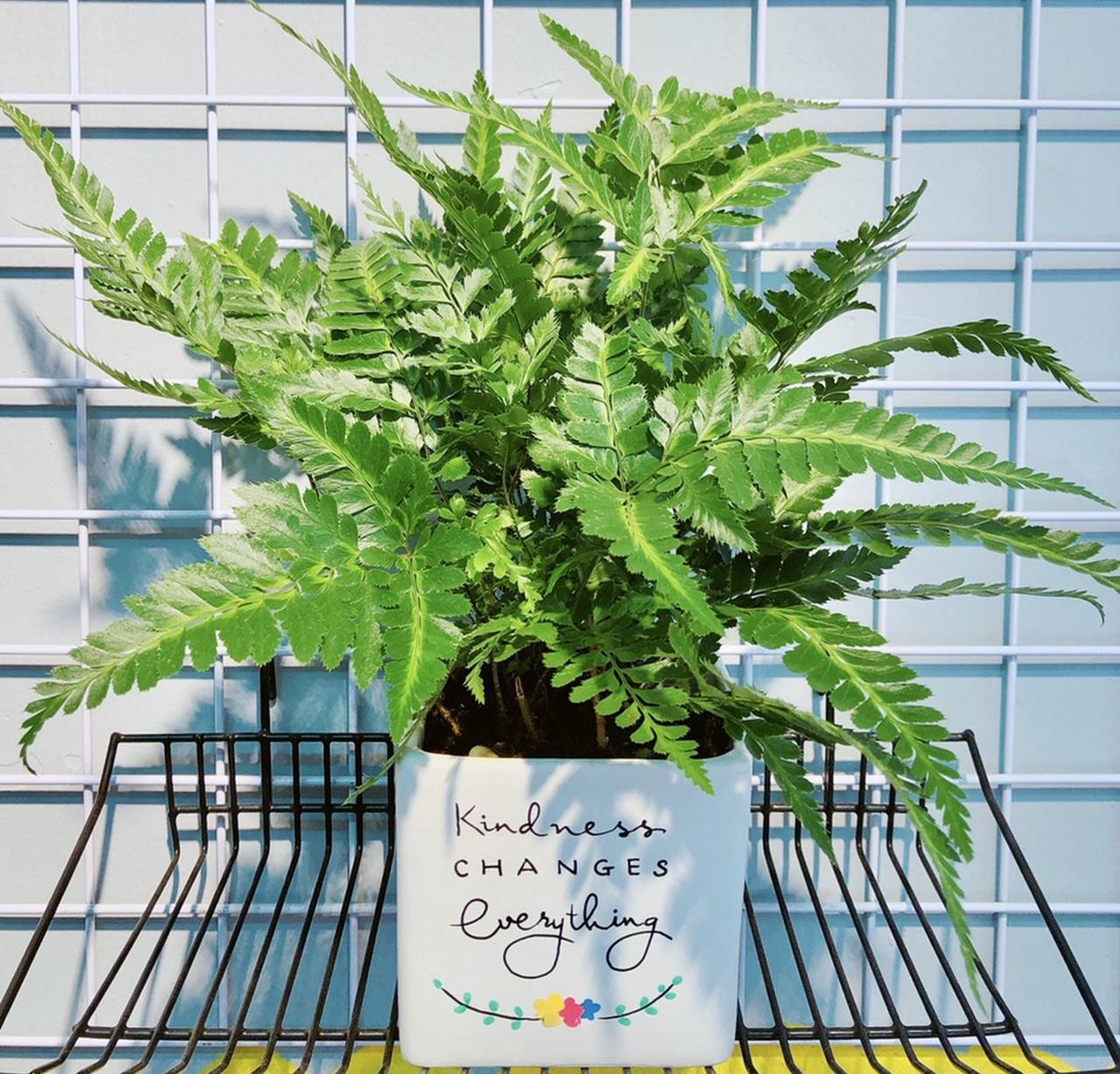 Muốn không gian sống luôn xanh mát, đừng bỏ qua những loài cây trồng này giúp hạ nhiệt cho ngôi nhà trong những ngày hè oi nóng - Ảnh 4.