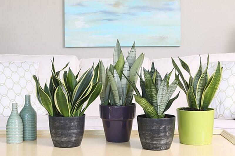 Muốn không gian sống luôn xanh mát, đừng bỏ qua những loài cây trồng này giúp hạ nhiệt cho ngôi nhà trong những ngày hè oi nóng - Ảnh 5.