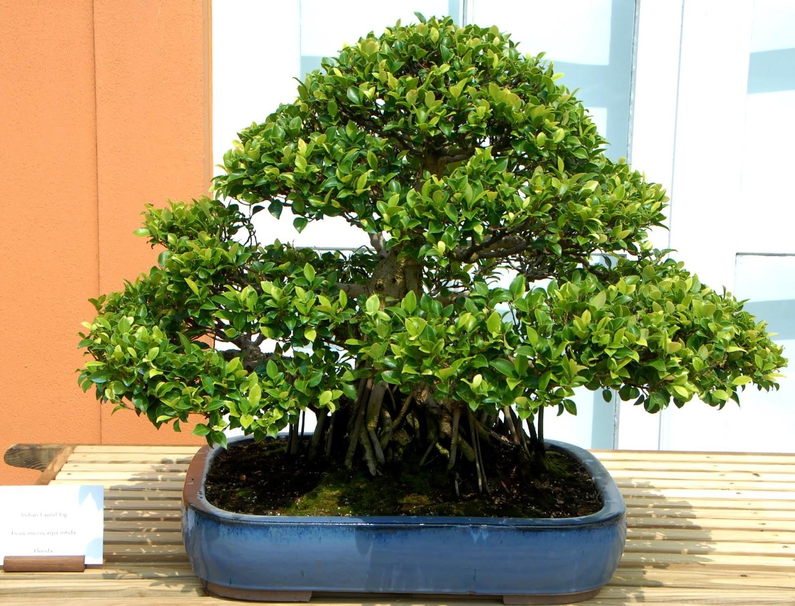 Muốn không gian sống luôn xanh mát, đừng bỏ qua những loài cây trồng này giúp hạ nhiệt cho ngôi nhà trong những ngày hè oi nóng - Ảnh 3.